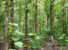 Foret_400x300